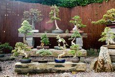 Ian's bonsai trees | por mariusz.and