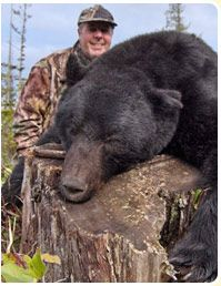 Looking black bear hunting in Quebec, Canada? Blackbearlodge Inc. offers hunting with a guide that has almost 4 decades of experience on a virtual virgin territory.