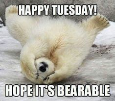 Photos Of Adorable Baby Polar Bears Celebrating International Polar Bear Day Smile Pictures, Bear Pictures, Animal Pictures, Funny Pictures, Smile Pics, Bear Photos, Tuesday Humor, Monday Humor, Tuesday Quotes