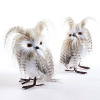 Set of Two Long-eared Owls