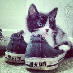 The #kittensofinstagram kitten of the day @jewduh ❄⛄ #cute #adorable #sweet #kitten #little #baby #cat #photooftheday #tagforlikes #cats