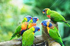Lóris arco-íris — Imagem de Stock #21642961