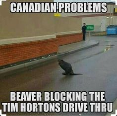 Only In Canada. Canada's source for news, culture, food, travel and memes. Canadian Memes, Canadian Things, I Am Canadian, Canadian Girls, Canadian Humour, Canada Funny, Canada Eh, Canadian Stereotypes, Meanwhile In Canada