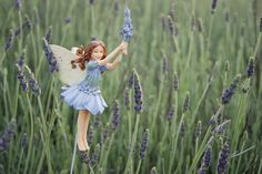 "Lavender fairie: Lavender's blue, diddle diddle""- So goes the song; All round…"
