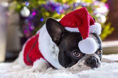 Картинки и открытки на Новый 2018 Год Собаки - Новый Год 2018
