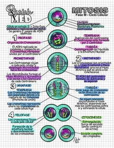 Medicine Notes, Medicine Student, Study Biology, Medical Careers, Science Notes, Medical Anatomy, School Plan, Mitosis, Nursing Notes