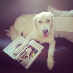 Looks like this pouch is reading a fashion magazine -- Doggy Dudes!