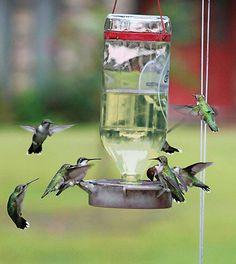 Ruby-throated hummingbird swarm!