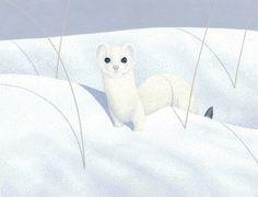 Ermine Weasel by Great Gray Art