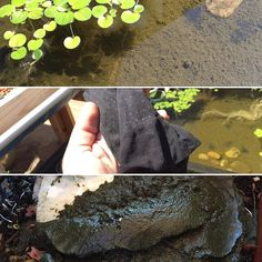 So I was just cleaning out some fish waste from my aquaponic system and I added the fish waste to my worm tower. Do you guys think the worms will eat the fish poop? The worms just got done with some veggie scraps I had put in there. I was looking online to see if I can find someone else that has tried to feed composting worms straight fish poop but I could not find anything of depth on the subject. (Top photo) - All the green stuff you see at the bottom of this container is fish waste…