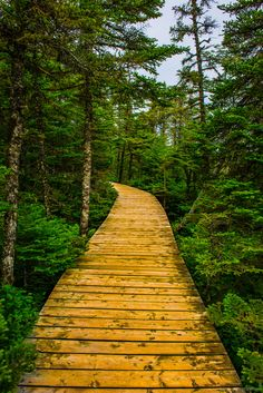 Visit Newfoundland & Labrador, Canada, on holiday with Canadian Affair. Top tips in our destination guide for things to see & do in the province! Newfoundland Canada, Newfoundland And Labrador, Constitution Of Canada, The Places Youll Go, Places To See, Beautiful World, Beautiful Places, Jeff Green, Cedar Cove