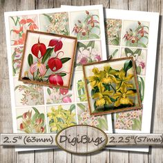 Vintage Orchid Images Digital Collage Sheet 63 mm 57 by DigiBugs Orchid Images, Collage Sheet, Digital Collage, Collages, Orchids, Decorative Boxes, Plant, Vintage, Unique Jewelry