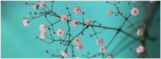turquoise wall and white flowers, nature, facebook timeline cover photo