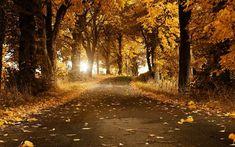 Autumn Forest Background HD.