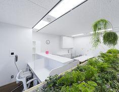medizin klinik-umgestaltung des innenraumes zimmerpflanzen