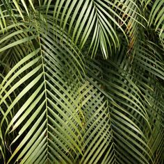 Foliage; photo from bicocacolors