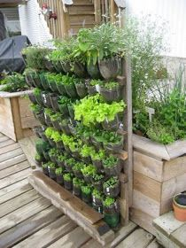 Build a vertical garden from recycled soda bottles DIY projects for everyone! - Build a vertical garden from recycled soda bottles DIY projects for everyone! Hydroponic Gardening, Organic Gardening, Container Gardening, Urban Gardening, Indoor Gardening, Gardening Tips, Gardening Courses, Gardening Supplies, Indoor Herbs