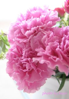 Carnation, pink - I will never forget... my first bouquet, a gift from my grandfather <3