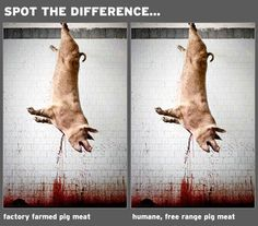 This will NEVER leave my mind..No animal should have to die to feed me when I can live a healthy life with a vegan diet********