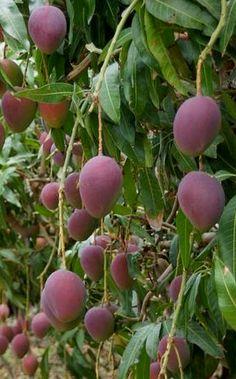 frutas pinterest_Pesquisa do Baidu