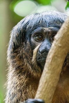 Wondering eyes.... by Hermen van Laar, via Flickr