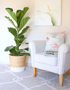 How do you transform a woven IKEA basket into a home trendy enough for a fiddle leaf fig tree? Simple spray-paint the bottom to give it a two-tone, paint-dipped appearance, as House of Hawkes did above.