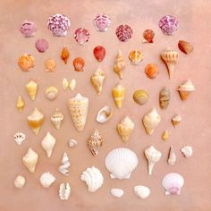 I just returned from a bucket-list birthday adventure – a shell hunting trip to Sanibel, Florida!The queen of seashell beaches... often proclaimed as the best in the world. Sanibel is so shelled-out it seems like there would be none lef...