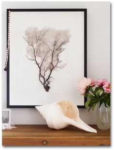 can frame beautiful coral/sea fans