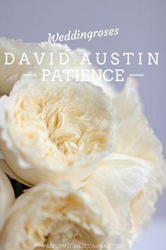 Patience from the David Austin Wedding Collection #luxuryroses #weddinginspiration #parfumflowercompany