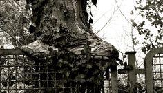 albero e ringhiera