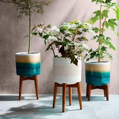 Inspired by the clean silhouettes of the '50s and '60s, our Mid-Century Turned Leg Planters stand on tapered, solid wood legs with a glazed, ceramic bowl. Finished with a reactive glaze — a technique admired for its variegated colouring — each piece is subtly one-of-a-kind.