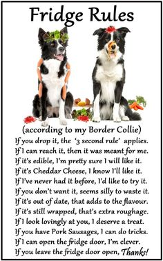"Border Collie - Humorous Magnetic Dog Fridge Rules. Size 6"" x 4"". Available from www.car-pets.co.uk and www.Amazon.co.uk:"