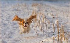 flying fur ball