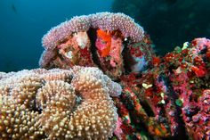 Ayvalık dalış okulu - ida dalış merkezi #scuba #scubadiving #underwater #dalisnoktam #bali🌴 #balidiving #tulamben #underwaterphotography www.idadiving.com