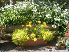 Best Container Garden Plants | Container Plantings