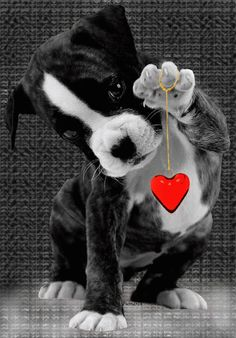 Animação animals -gif birthday images, happy birthday wishes Animals And Pets, Baby Animals, Cute Animals, Coeur Gif, Cute Puppies, Cute Dogs, Boxer Love, Tier Fotos, Cute Kittens