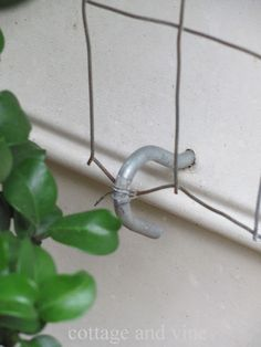 cottage and vine: DIY Trellis-using wire fencing and hooks! weave or tie the roses to it- would probably also work for clematis.
