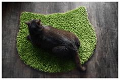 Your cat's new favorite rug.
