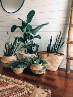 6 Creative Ways To Decorate with Houseplants - - Not sure how to arrange indoor plants? We've got several creative ideas for plant containers that will let you show off your green thumb.
