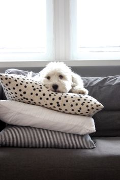 homevialaura | Afro Art cushion | #cushions | Coton de Tulear #dog