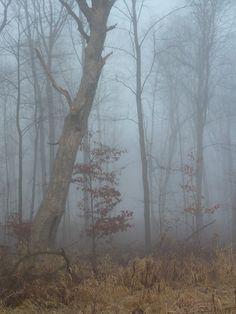 Hobbit Woods in Polk County Wisconsin
