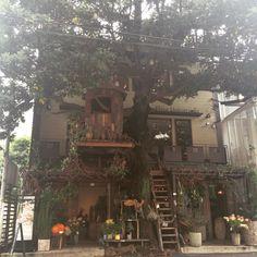 botanical shop with a treehouse (minato-ku, Tokyo jpn)