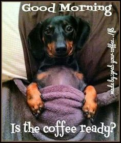 ♥ Who is making my coffee? www.ochomesbyjeff.com #wagaroo #ilovedogs #orangecountyrealtor