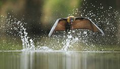 Fly-by drinking by Ofer Levy