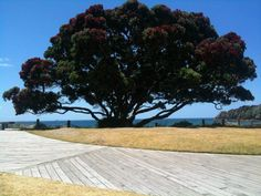 """Winner: Jacqui Title: It's just says """"Summer"""" Description: I took this photo last December using my phone, at Mt Maunganui beach. New Iphone, New Zealand, December, Beach, Summer, Christmas, Beautiful, Xmas, Summer Time"""