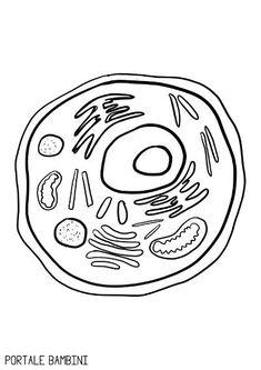 La Cellula: Riassunto e Mappa per la Scuola Primaria | Portale Bambini College Nursing, Nursing Notes, Jobs In Art, Cellulite, Classroom, Coding, Science, Symbols, Letters