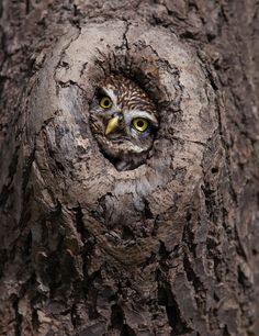 Peek-a-boo by Billy Currie Pinned by www.myowlbarn.com
