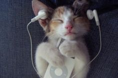 Just a kitten listening to some music