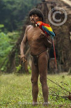Huaorani Indian man, Megatowe Ontogamo, with his pet scarlet macaw (Ara macao). Gabaro Community, Yasuni National Park, Amazon rainforest