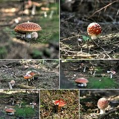 Photo mushrooms forest on a walk